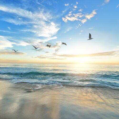 Flock of birds over a beach